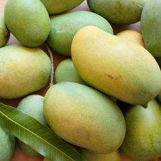 Dasheri Malihabaadi mango 1 kg