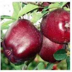 American red  apple 1 kg
