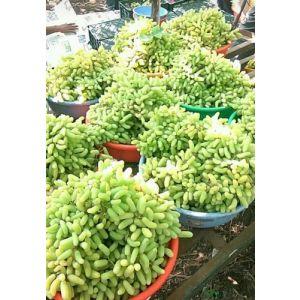 Nashik  grapes 500 g